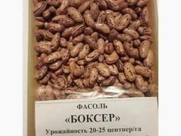 3D фасоль высокого качества из Киргизии - photo 3