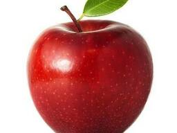 Best apple