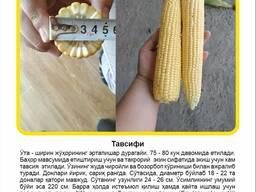 Bratella F1 Семена Сладкой Кукурузы