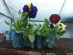 Цветы Gloriya
