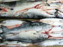 Дальневосточная замороженная рыба - фото 5