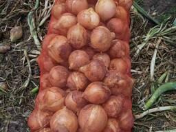 Фрукты и Овощи из Солнечного Узбекистана