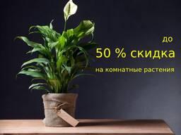 Комнатные растения из Европы со скидкой до 50%