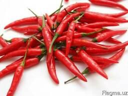 Красный, острый стручковый перец (ферганский и индийский)