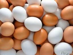 Куриное яйцо на экспорт