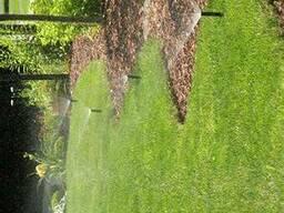 Ландшафтный дизайн, полив, освещения, посадка растений