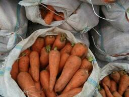 Морковь красная сочная