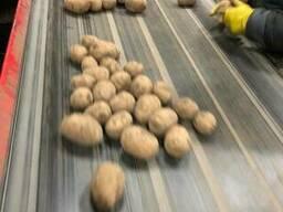 Оптовая торговля продовольственной картофели и семян Гала.