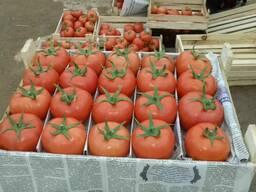 Овощи и фрукты из солнечного Узбекистана
