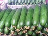Памидоры и огурцы без гмо и 100% биопродукты - фото 3