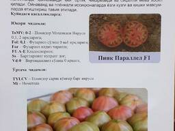 Pink Parallel F1 семена розовых томатов