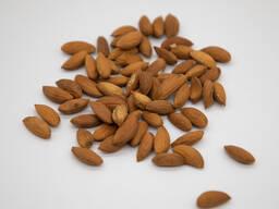 Поставка узбекских орехов (ядро миндаля)