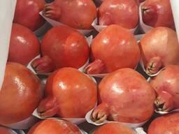 Поставляем сельхозпродукцию из Узбекистана
