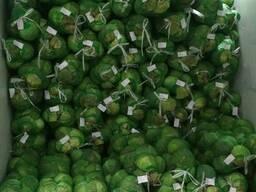 Продаем молодую капусту (сорт Green Fresh) из Узбекистана