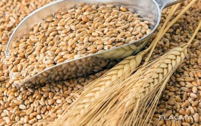 Продам пшеницу 3-4-5 класса