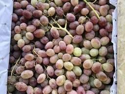 Продаётся Виноград - фото 2