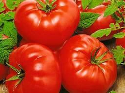 Продажа помидор!