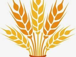 Пшеница 3,4 класс