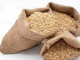 Пшеница 3 и 4 класс для производителей муки