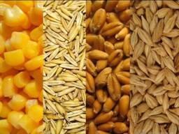 Пшеница 3 и 4класса