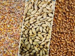 Пшеница, Ячмень, Соя
