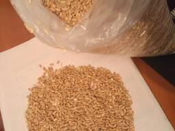 Реализуем крупы горох, пшено, гречка, муку, пшеницу
