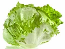 Салатный лист Айсберг