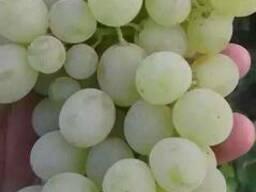 Сельхоз продукция, свежие/сушеные овощи и фрукты, орехи