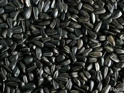 Семечка масличная