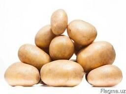 Семенной картофель 1 репродукции