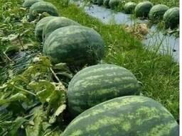 Фрукты, овощи, сухофрукты и венники из Узбекистана