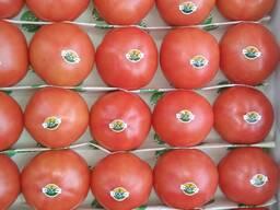 Свежие помидоры/ томаты