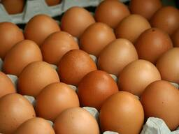 Свіжий стіл яйця коричневий і білий