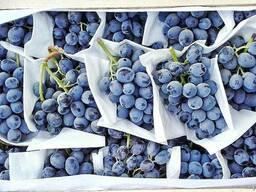 Виноград 1 сорт