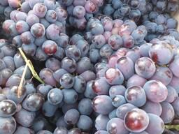 Виноград красный Узбекистан