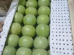 Яблоко семеренка