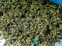 Якорцы стелющиеся трава - трибулус tribulus - фото 2