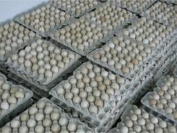 Яйца куриные инкубационные бройлер Ross-308