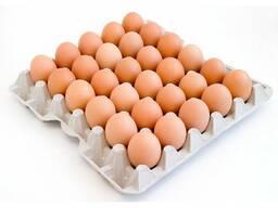 Яйцо куриное С-1 оптом