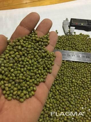 Зеленый мунг маш , фасоль, нут из Узбекистана