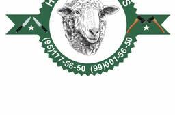 Живые бараны и овцы на Курбан Байрам